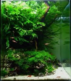 nano aquascape archives aquascaping aquarium