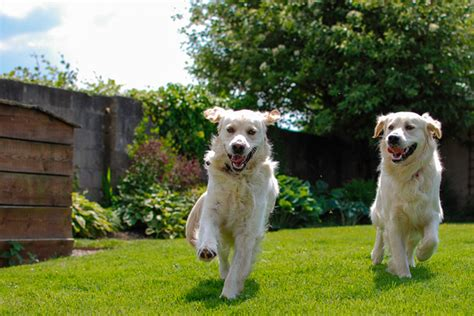 dog in the backyard how to create a dog friendly yard kg landscape management