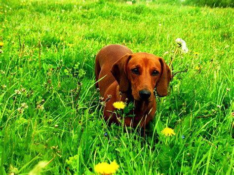 list of all types of small breeds