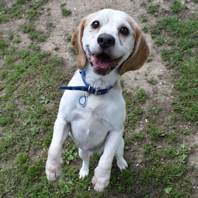how to rehome a dogs battersea dogs cats home