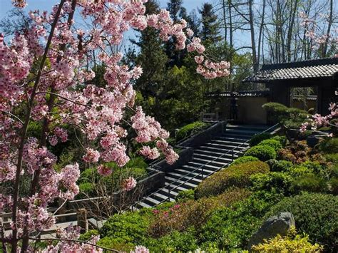 Japanese Gardens In Los Angeles And Where To Find Them Flower Garden Los Angeles