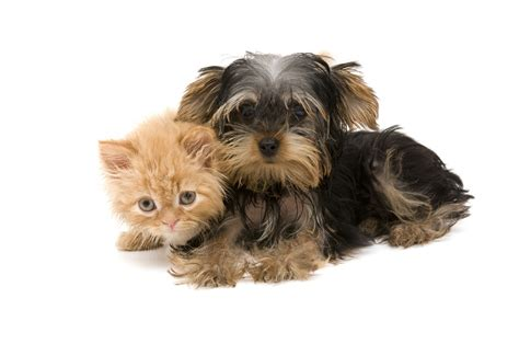 images of puppies and kittens kittens and puppies wallpaper