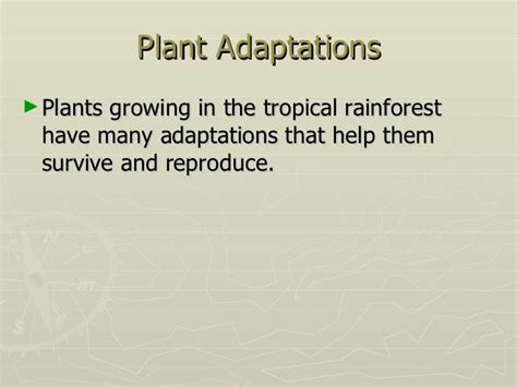 what are some plant adaptations in the tropical rainforest tropical rainforests