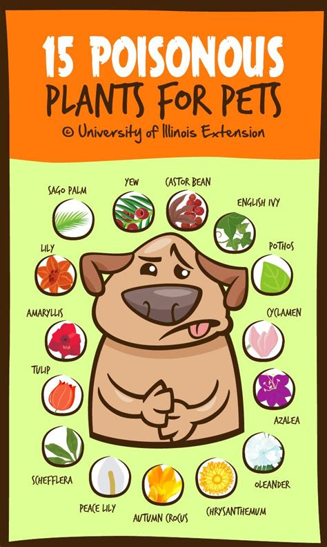 what plants are poisonous to dogs 17 best ideas about poisonous plants on poison