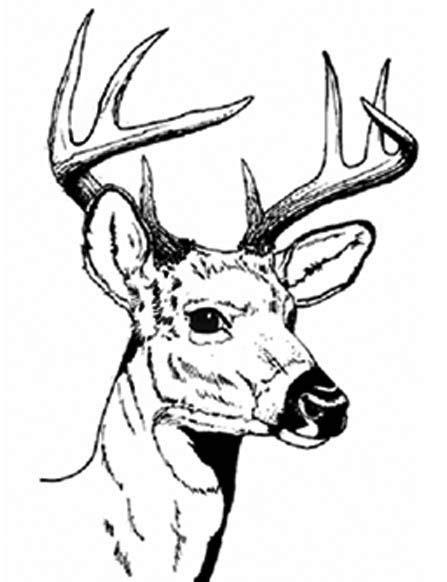 coloring page of deer head deer head coloring pages deer pinterest deer hunting