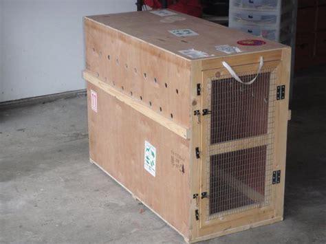 shipping a puppy by air iata approved crate for international air shipping saanich sidney