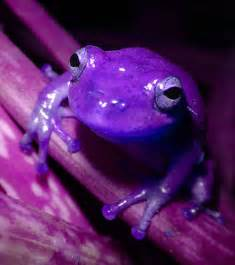 naturally purple on pinterest purple new zealand and