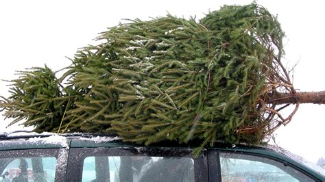 when to get a real tree get real trees should not be artificial today