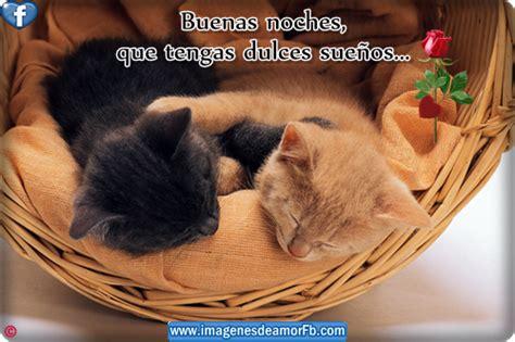 imagenes buenas noches con gatos imagenes de imagenes de gatitos con frase