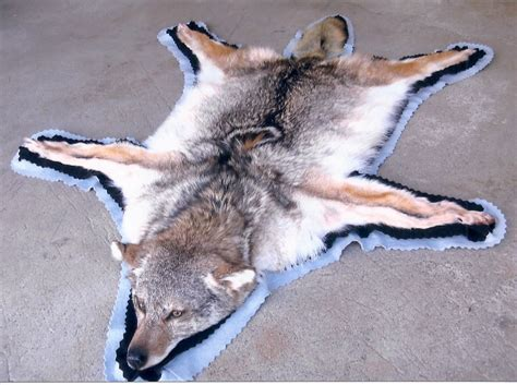 wolf rug taxidermy image gallery wolf rugs