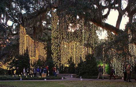 vertical hanging christmas lights brookgreen gardens events and festivals page 4 of 4