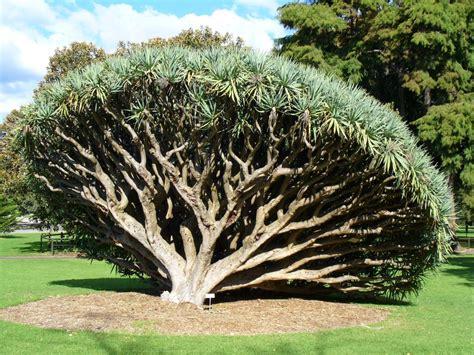 Sydney Botanical Garden Panoramio Photo Of Sydney Royal Botanic Gardens