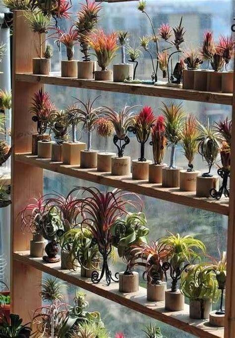 air plants      coolest display