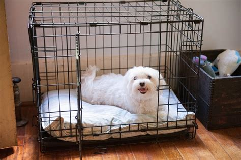 how can a puppy stay in a crate why we using crates daily tagdaily tag