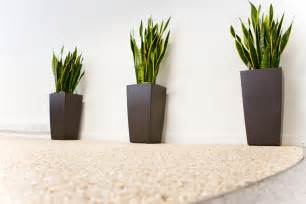 Plants For The Office by Office Plants On Pinterest Interior Plants House Plants