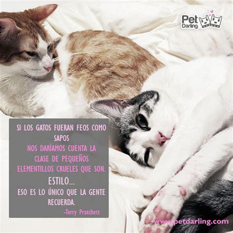 imagenes de gatos sin frases frases celebres sobre gatos parte 1 petdarling
