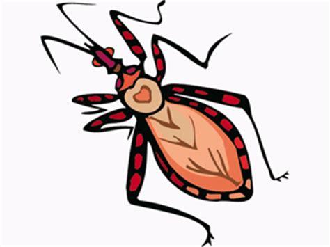 imagenes animados de insectos insectos gif animado gifs animados insectos 208640