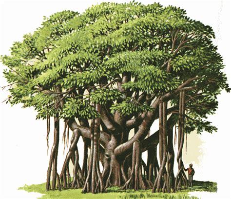 Trees Lapar resourceful parenting kisah pengembara dan pohon beringin