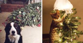 14 dogs and cats that destroyed christmas