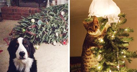 14 dogs and cats that destroyed christmas bored panda