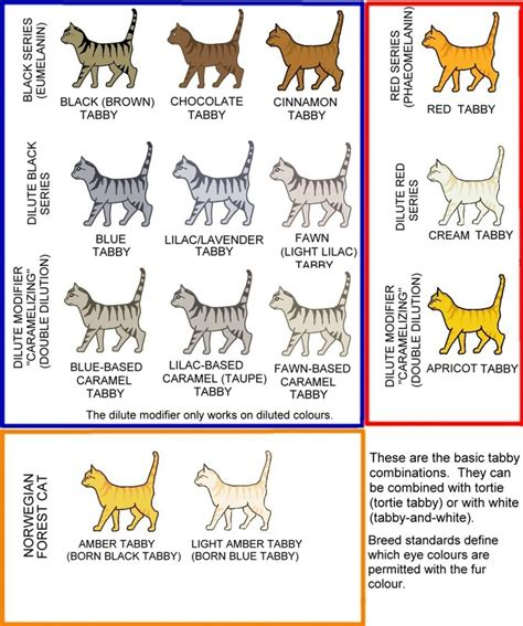 cat colors colour and coat genetics in cats cats from your wildest