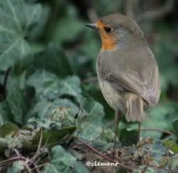 les oiseaux de nos jardins chasse