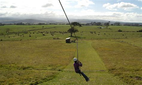 flying fox swing activities forest lodge farm