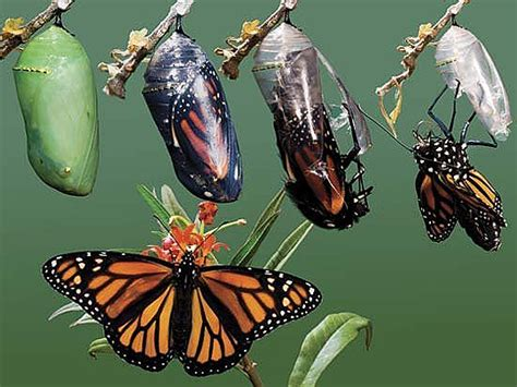 metamorphosis a prophetic word about radical change in 2018 books spiritual formation insight