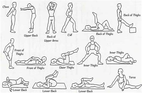 diagram of stretches if you checked part i you would that we