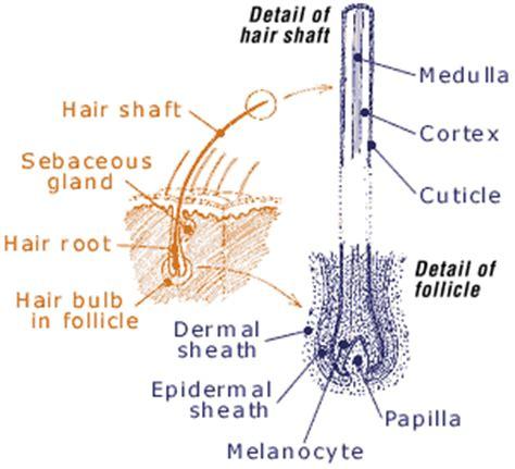 hair diagram ecrimescenechemistrymiller lr rr af ld