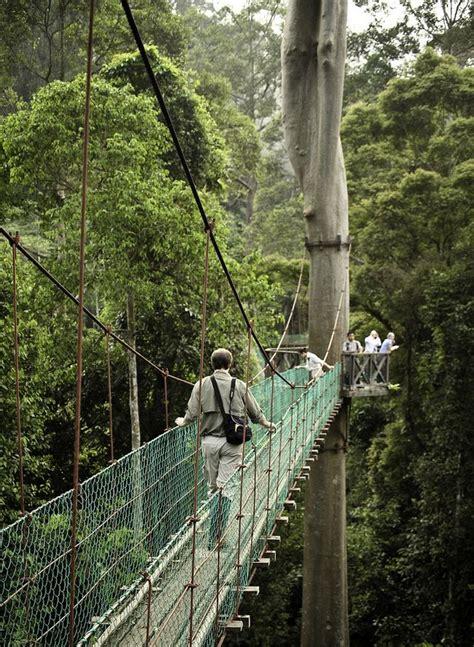 Canopy Walkways by Gallery For Gt Borneo Rainforest Canopy Walkway