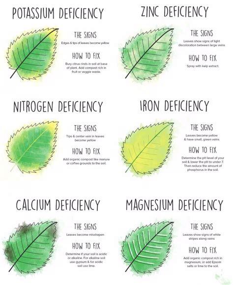 255057761f046f7cb42a94cbdabe76b4 the plant guide