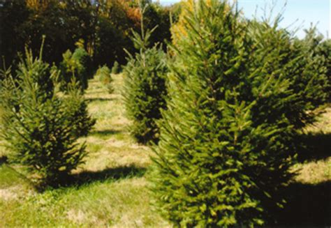 christmas memories tree farm kentucky christmas tree