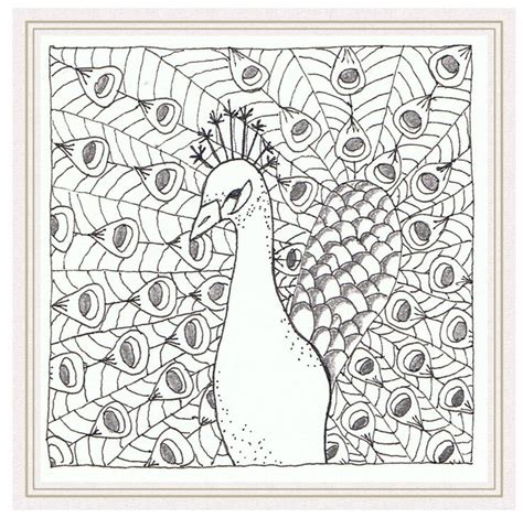 zentangle pattern peacock 43 best images about zentangle peacocks on pinterest