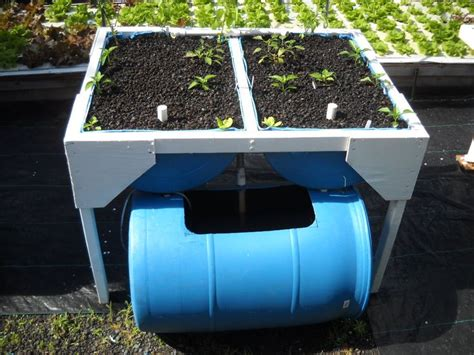 backyard aquaponics pdf this is what aquaponics gives the capacity to develop a