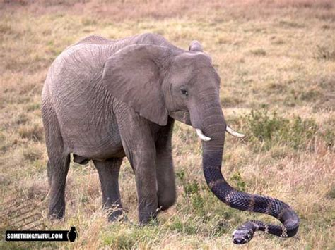 imagenes anormales reales animal anomalies 5 part 2