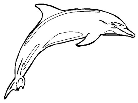 Free Printable Dolphin Coloring Pages For Kids Coloring Page Dolphin