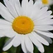 fiori di stagione settembre fiori per matrimonio settembre fiori per cerimonie