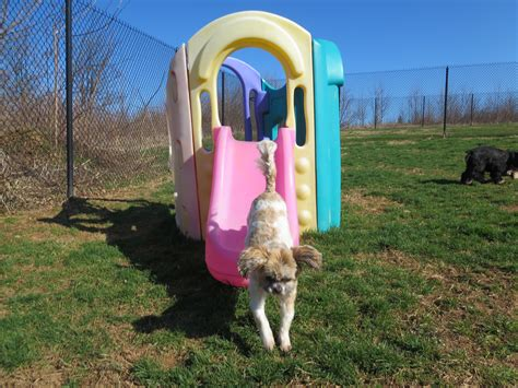 country comfort kennel country comfort kennels c for pets in street md
