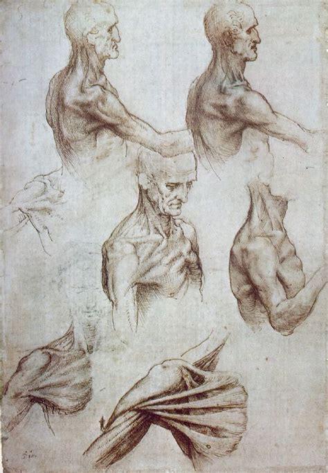 Sketches By Leonardo Da Vinci by Leonardo Da Vinci Anatomical Drawings