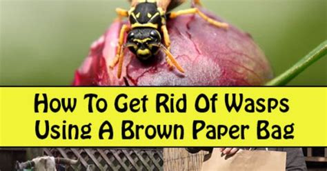 how to get rid of wasps using a brown paper bag yard