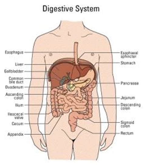 where is your pancreas located in your diagram chirhoclin pancreatitis information