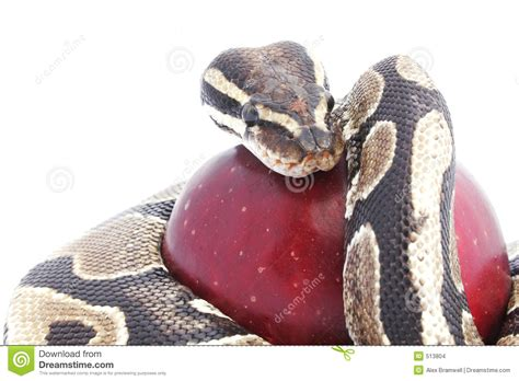 snake apple snake and apple stock images image 513804