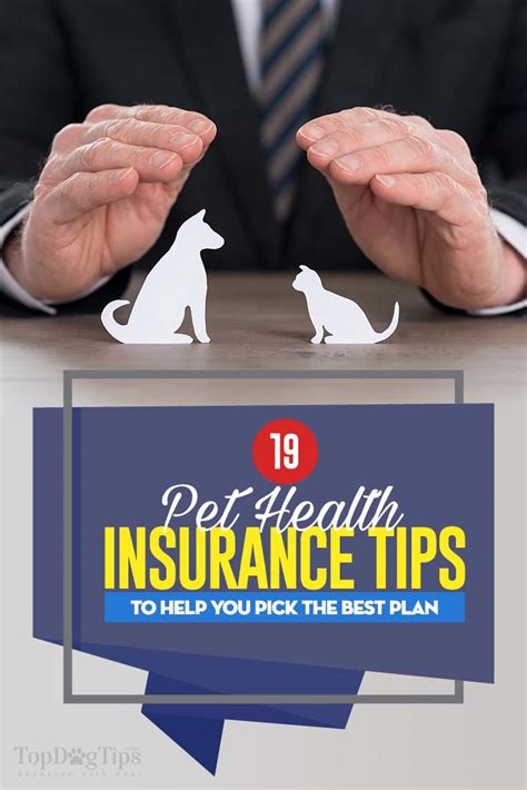 infographic  pet health insurance tips  pick