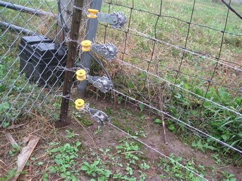 Backyard Chickens Electric Fence High Tensile Electric Fence Backyard Chickens