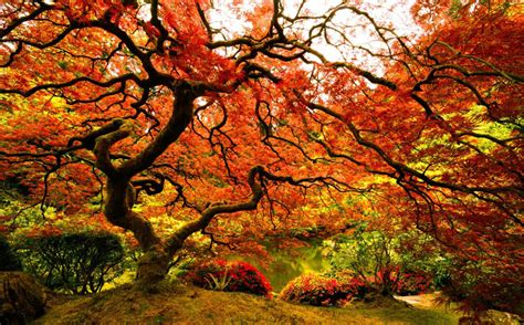 top 10 pictures of trees for day picture of the day japanese maple at the portland japanese garden 171 twistedsifter