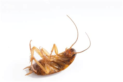 pestcontrol pest tips