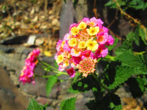 imagenes flores silvestres flores silvestres puras vagancias