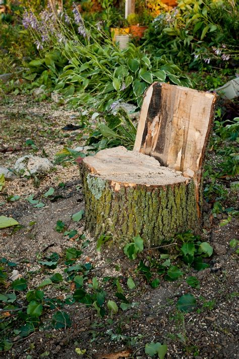 tree stump seats repurposing a tree stump as a seat for the home