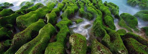 cool taiwan moss facebook cover